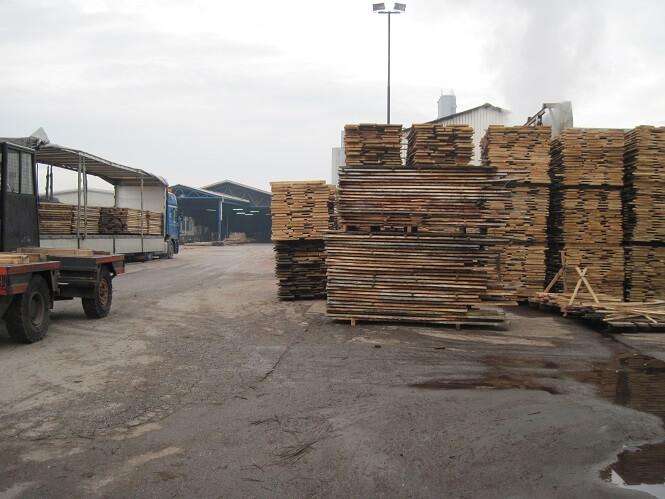 עץ בוק בלתי גזום מיובא מבוסניה