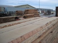 unedged beech hardwood timber