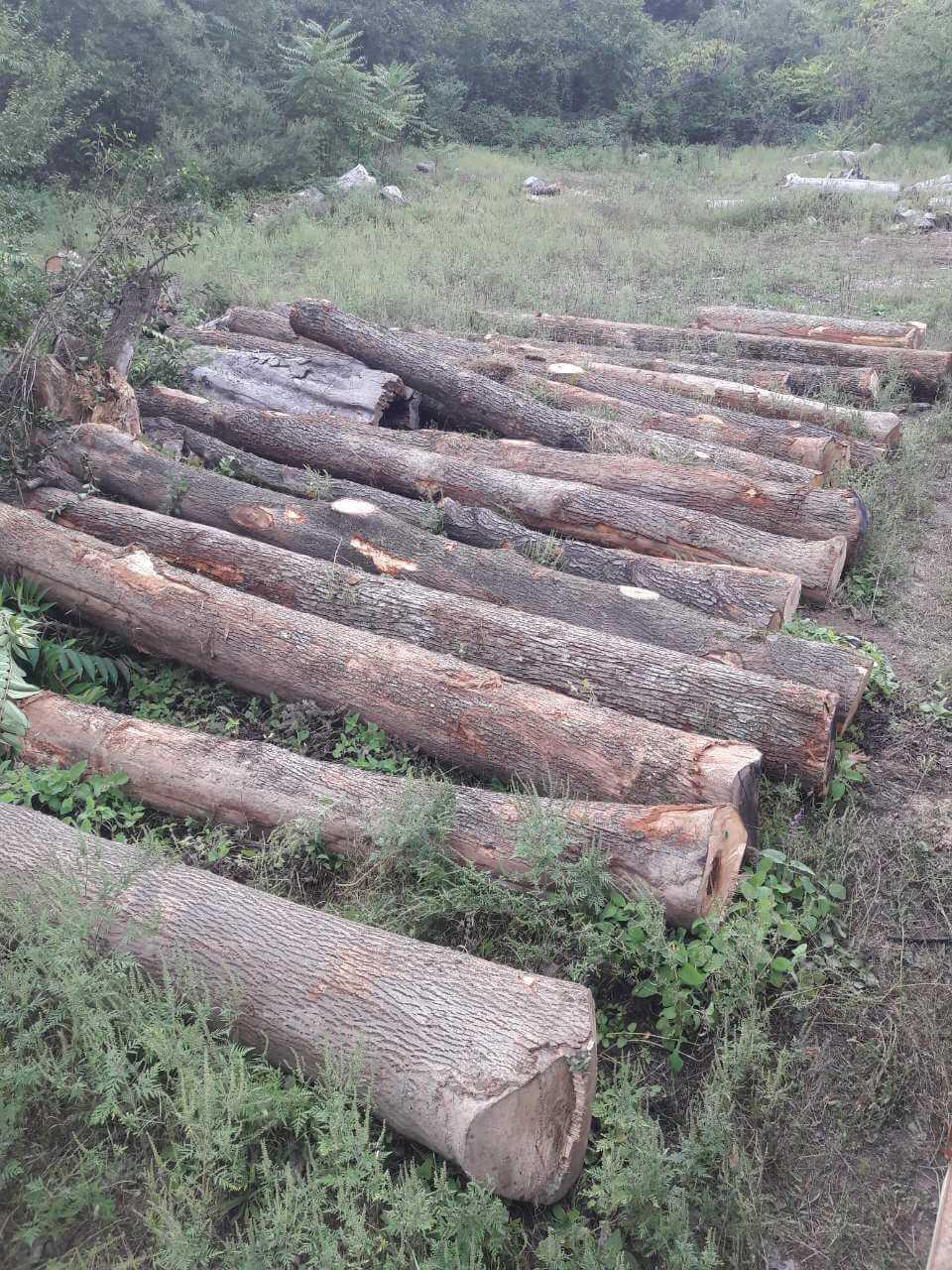 european red oak logs