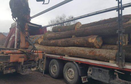 red oak logs