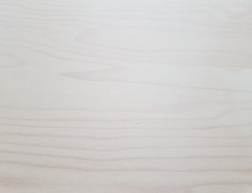 All You Need to Know About Light Beech Wood Timber